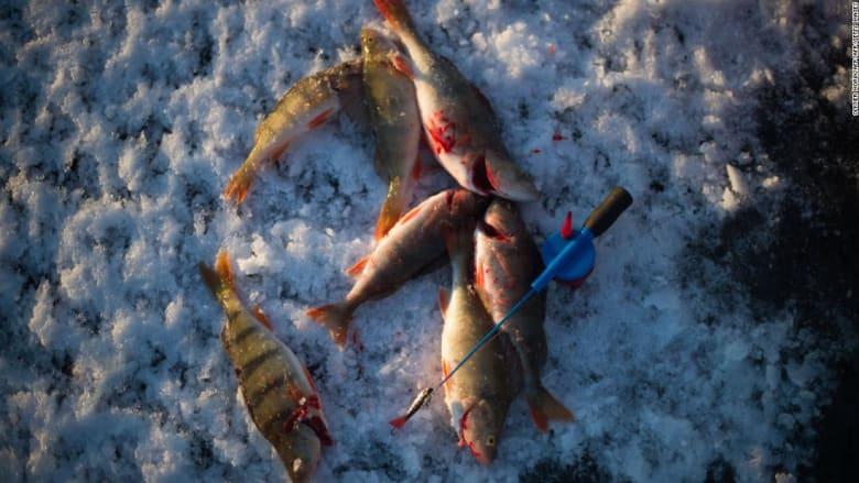 """كيف تستخدم """"السحر"""" لصيد الأسماك في الجليد؟"""