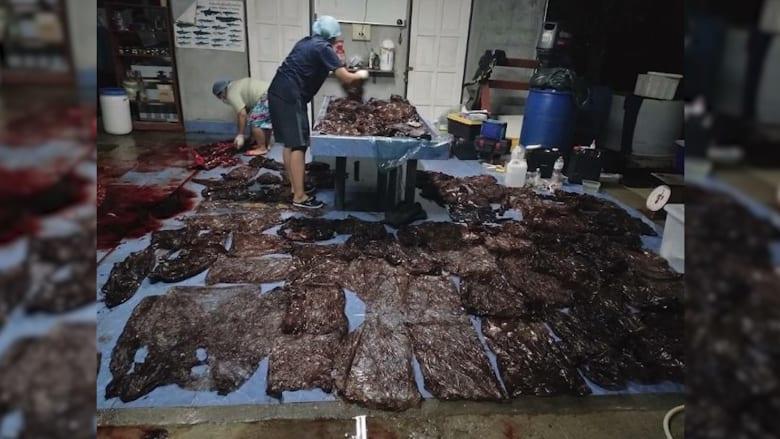 بسبب النفايات.. نفوق حوت بعد ابتلاع 80 كيس بلاستيكي