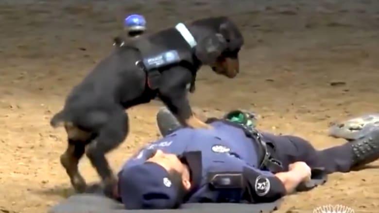 شاهد.. كلب يجري الإنعاش القلبي لشرطي