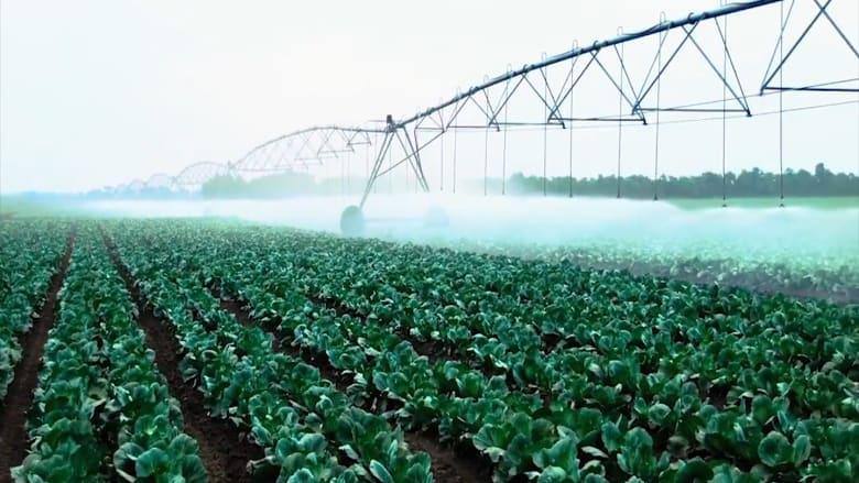 أكبر منشأة للزراعة الرأسية في العالم