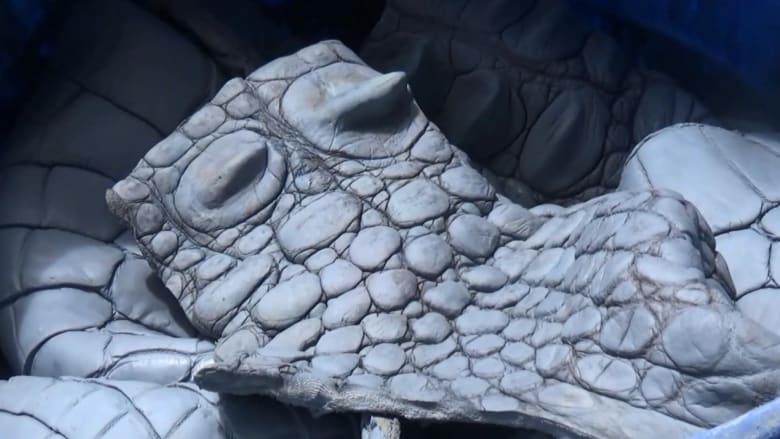 انتقاماً لقتل رجل.. ذبح قرابة 300 تمساح في إندونيسيا