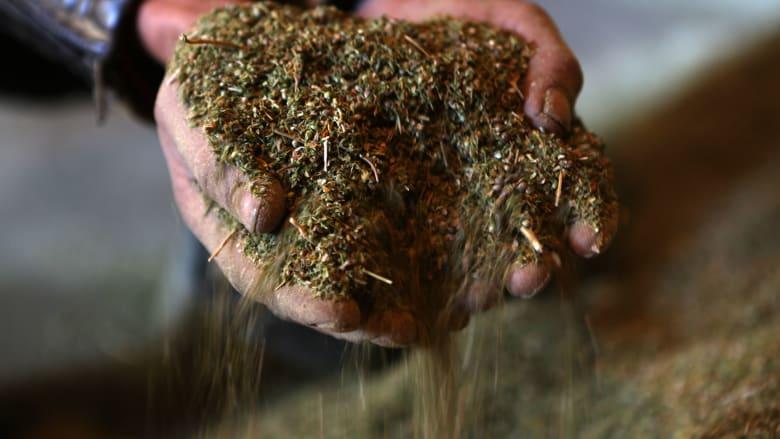 """مجلس النواب اللبناني يدرس مشروع قرار يسمح بزراعة """"الحشيشة"""" لاستعمالات طبية"""
