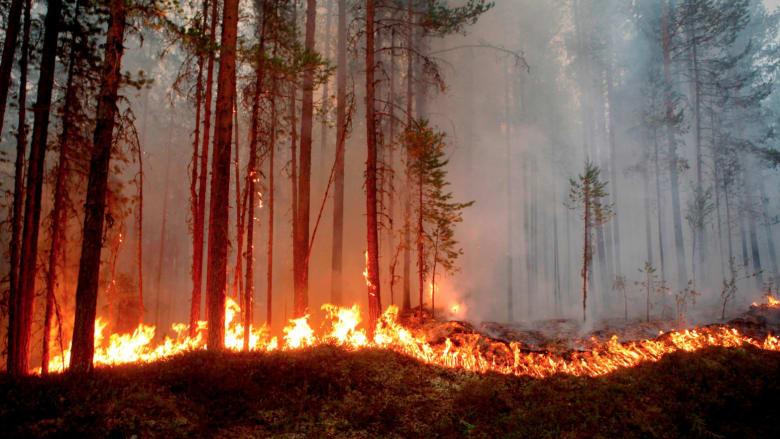 شاهد.. حرائق يوليو وموجات الحرارة القياسية حول العالم