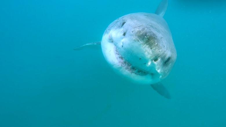 """في المحيط الهادئ.. العثور على """"مقهى القرش الأبيض"""""""