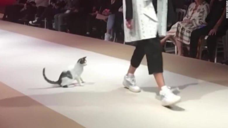 قطة ضالة تسرق الأنظار على منصة عرض أزياء في إسطنبول