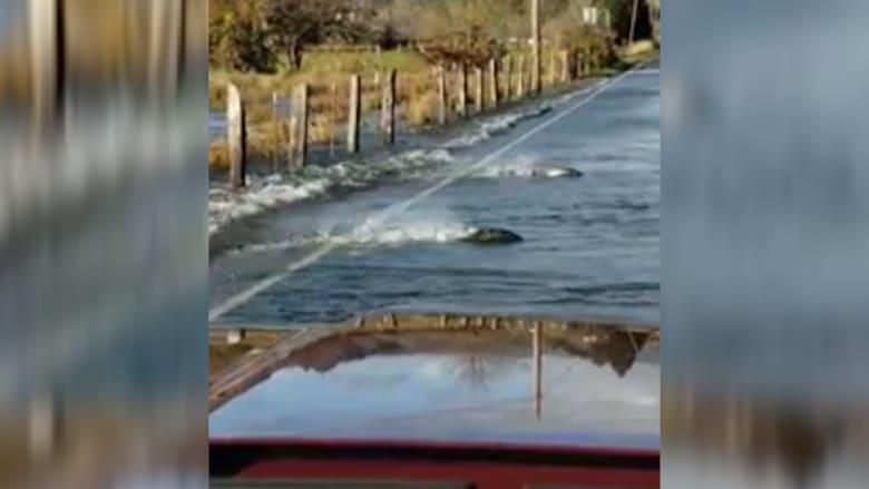 مشهد غريب.. أسماك تعبر الطريق في واشنطن