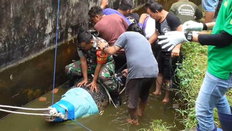 امرأة تطعم تمساحاً فأصبحت جثة هامدة