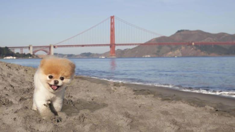 """الكلب الأكثر جاذبية في العالم """"بوو"""" يفارق الحياة"""