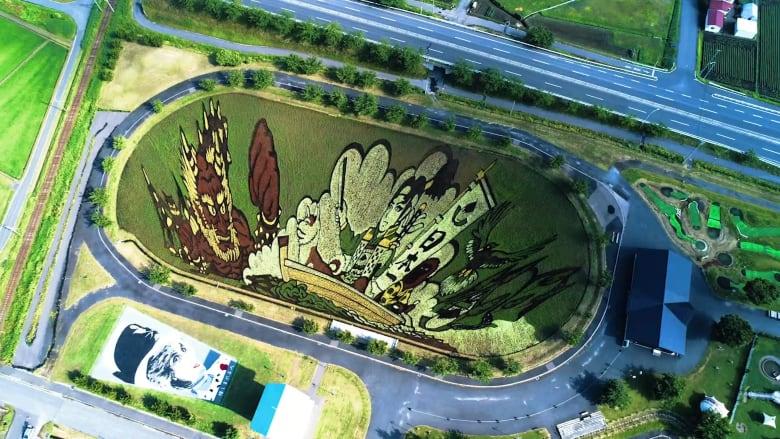 كيف تتحول حقول الأرز إلى لوحات فنية في قرية يابانية؟
