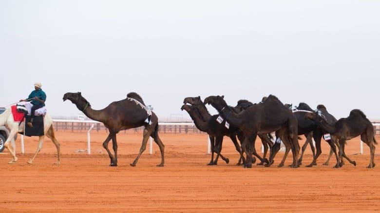 أميرة سعودية تحقق المركز الأول في أول مشاركة نسائية في مهرجان الإبل