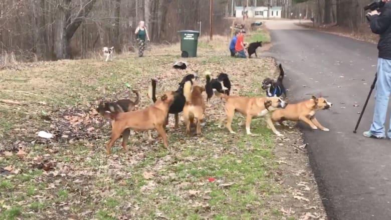 شاهد ما حدث لامرأة نهشتها عدة كلاب بمئات العضات