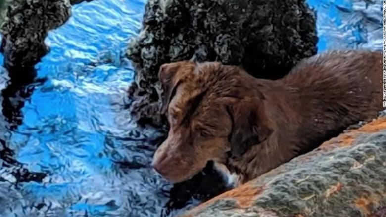 العثور على كلب يسبح على بعد 220 كيلومترات من سواحل تايلند