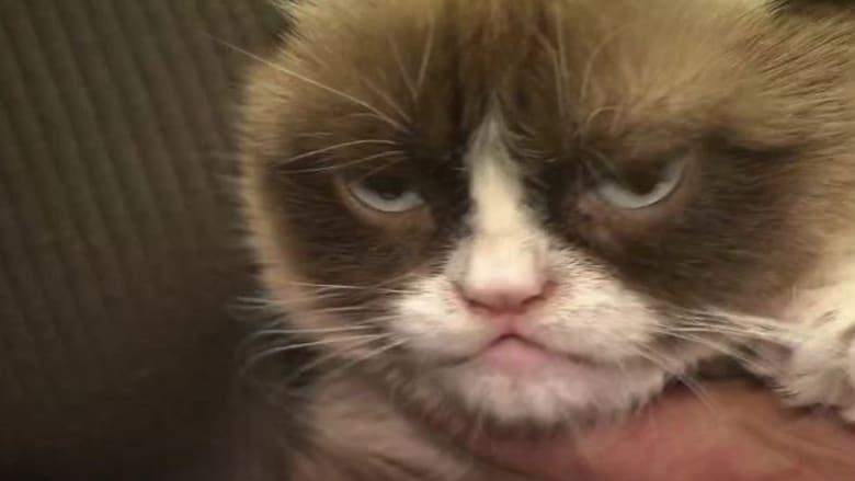 """رحيل """"القطة الغاضبة"""".. أكثر القطط شعبية على الإنترنت"""