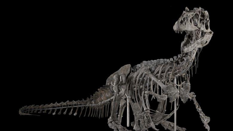 """بعد غيابها.. الدينوصورات تعود إلى متحف """"سميثسونيان"""""""