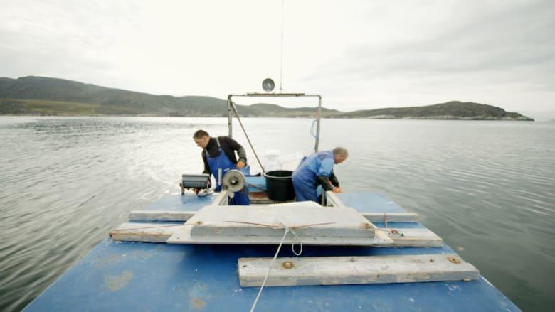 ما الذي يهدد نمط الحياة في أكبر جزيرة في العالم؟