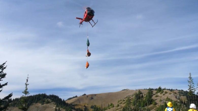 نقل ماعز معصوبة العينين بمروحية إلى حديقة وطنية.. وهذا السبب