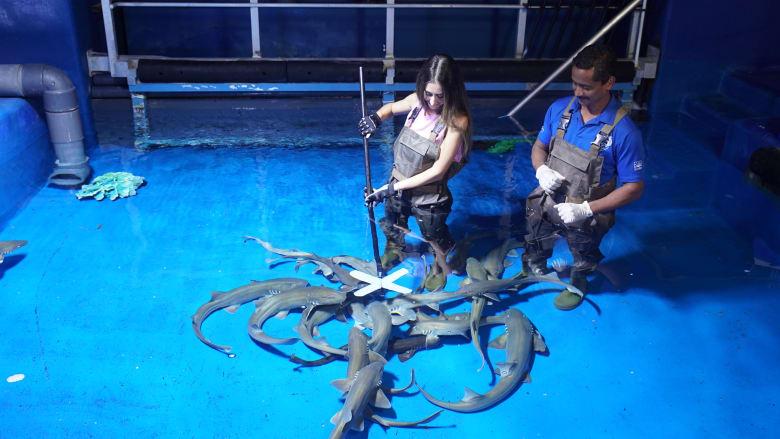 تجربة تدريب وإطعام أسماك القرش في دبي مول