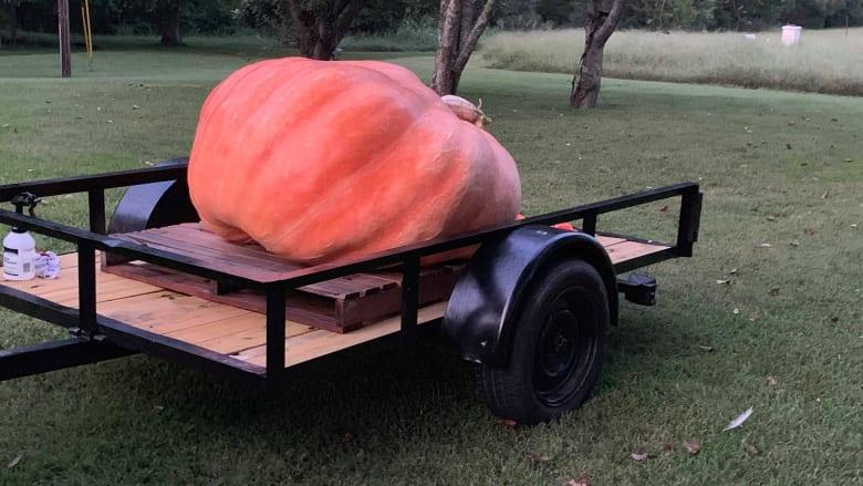 رجل يزرع يقطينة بوزن يتجاوز 400 كيلوغرام وينحت منها قارباً