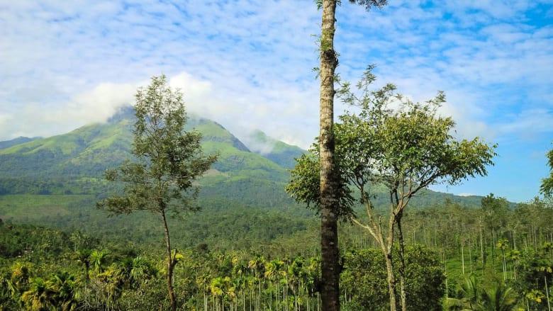 في كيرلا بالهند.. اختبر العيش في وئام مع الطبيعة