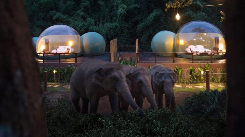 منتجع يتيح لك الفرصة لقضاء ليلة في فقاعة بجانب الفيلة في تايلاند