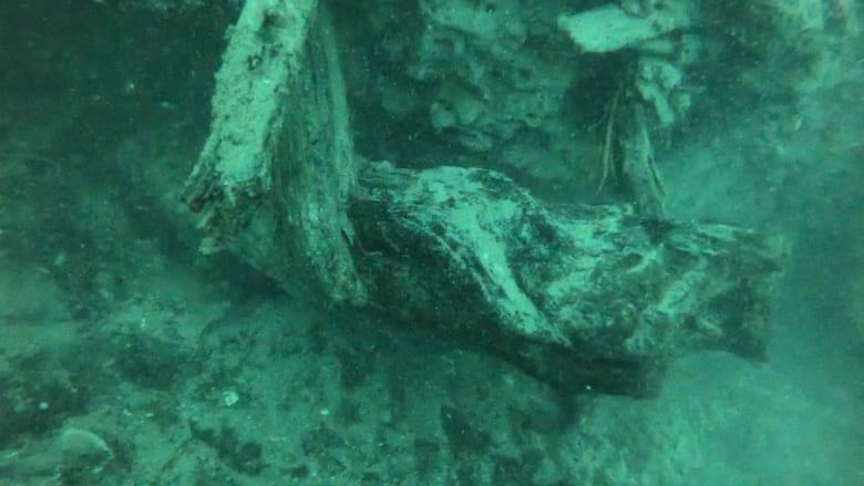 غابة قديمة تحت الماء قد تفتح الأبواب لاكتشافات جديدة في عالم الأدوية