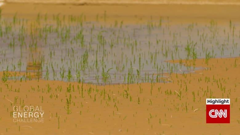 كيف يمكن تحويل النباتات التي تنمو في المياه المالحة إلى وقود حيوي للطائرات؟