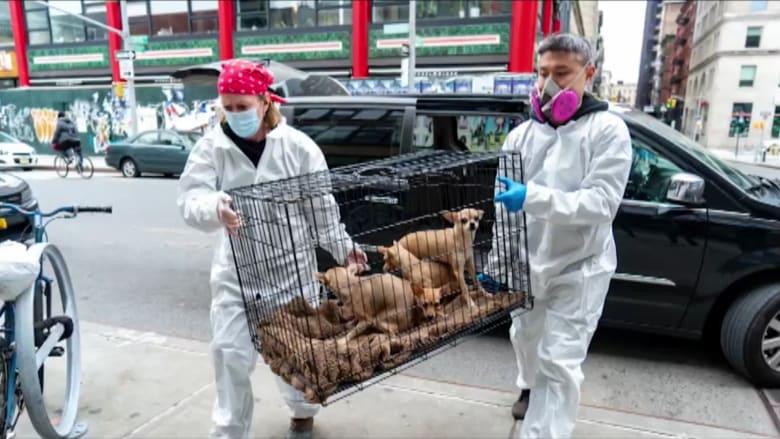 لماذا يتخلى الناس عن حيواناتهم الأليفة وسط تفشي فيروس كورونا؟