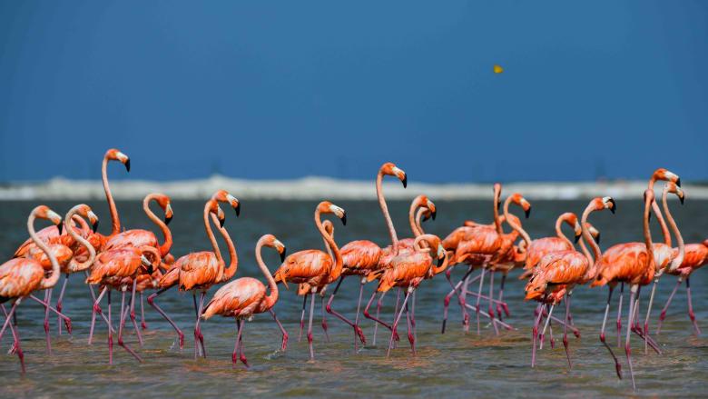 دراسة غريبة.. لون طيور الفلامنغو الوردية يحدد مدى عدوانيتها