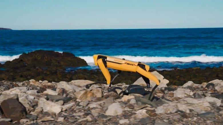 200616131705-spot-robot-super-169.jpg
