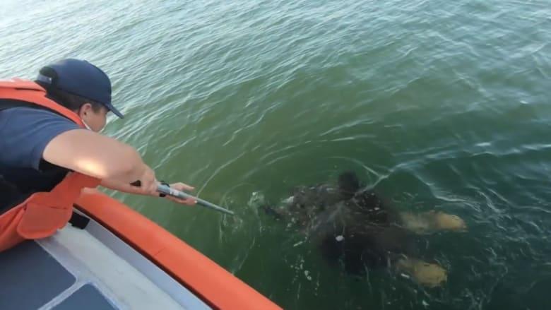 عملية إنقاذ وتحرير سلحفاة ضخمة عالقة في إحدى شباك الصيد قبالة سواحل نيوجيرسي