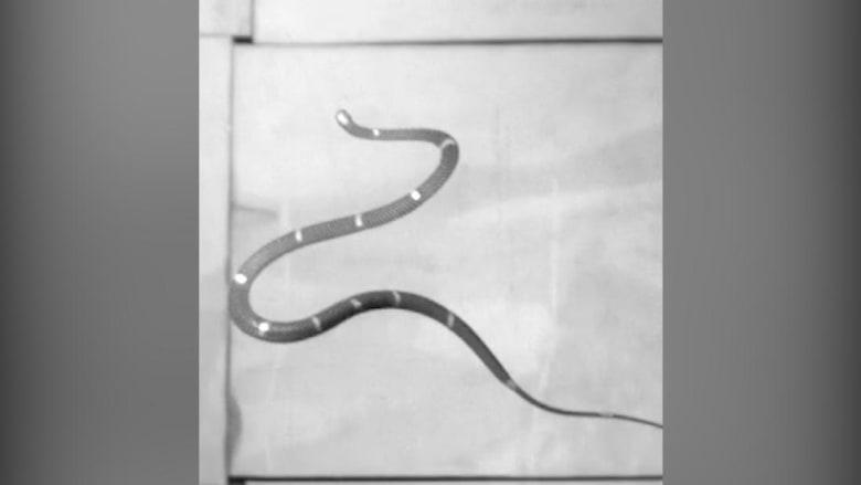 200630131632-flying-snakes-super-169.jpg