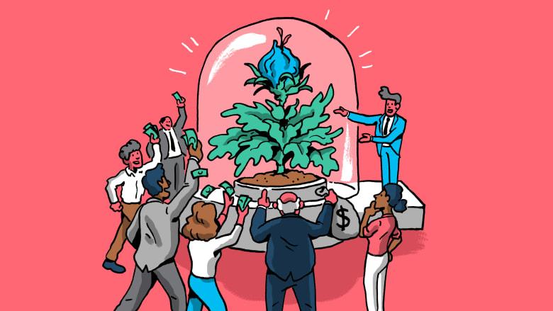 دول عربية استثمرت بأكبر عدد من الشركات الناشئة هذا العام.. ما هي؟