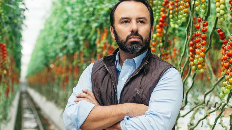 لتعزيز الإنتاج الغذائي المحلي.. كيف يتم زراعة الطماطم في صحراء الإمارات؟