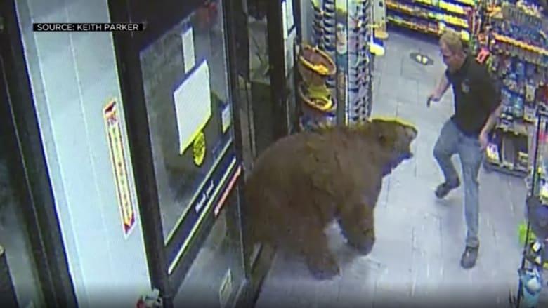 شاهد.. كاميرا ترصد مواجهة مخيفة مع دب عملاق داخل متجر في كاليفورنيا
