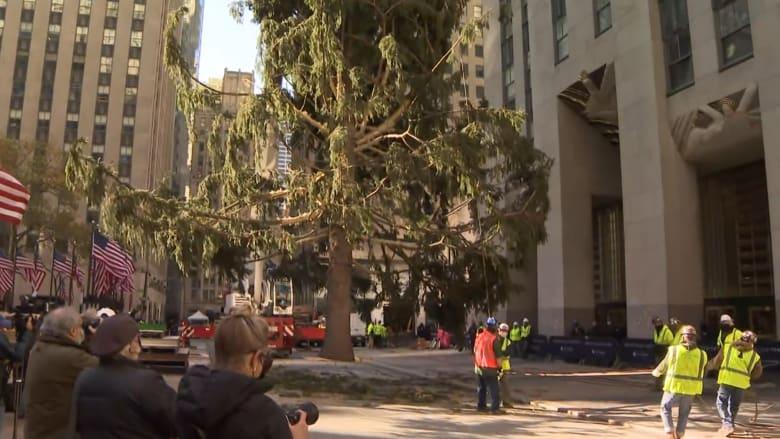 بوزن 11 طنا.. شجرة عيد الميلاد تأخذ مكانها في ساحة مانهاتن بنيويورك