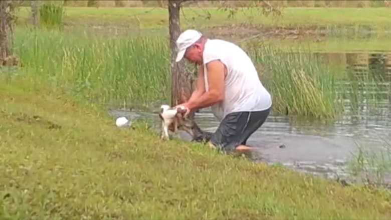 رجل يصارع تمساحاً لينقذ كلبه من أن يؤكل حياً