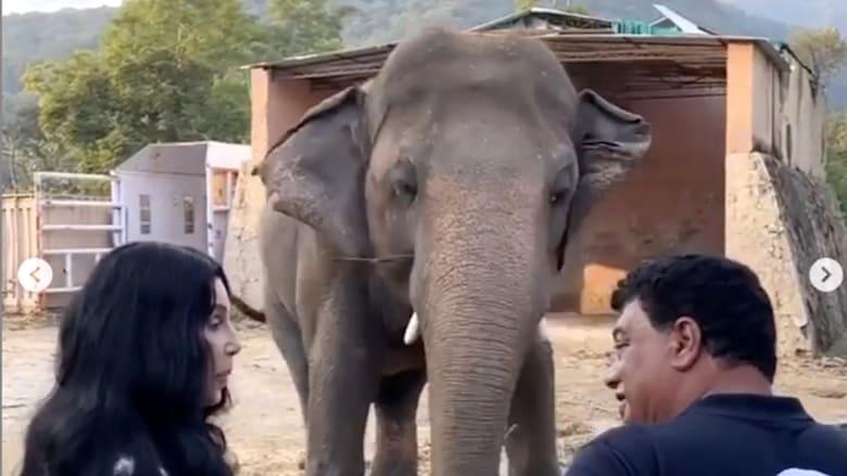 """شاهد.. شير تغني لـ""""الفيل الأكثر وحدة في العالم"""""""