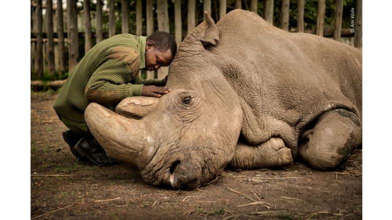 منها لحظات وداع مؤلمة لوحيد القرن الأبيض النادر.. صور مذهلة تتنافس على جائزة مصور الحياة البرية لعام 2020