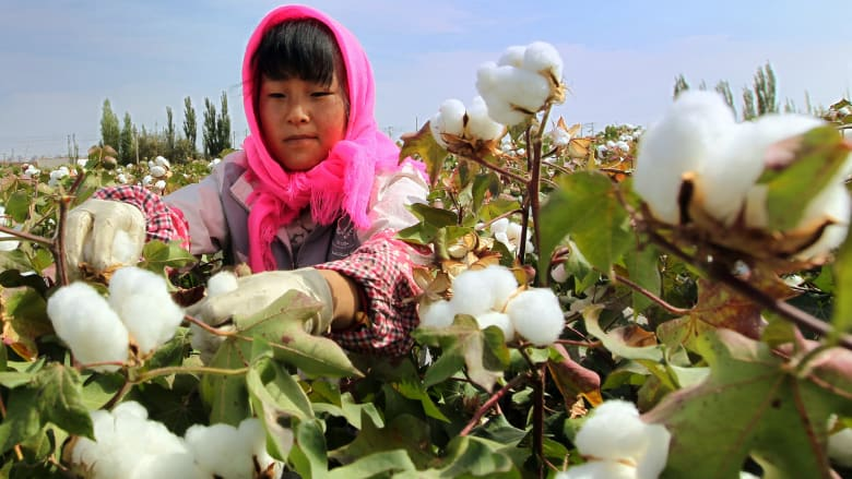 الولايات المتحدة تمنع استيراد القطن من الصين بسبب انتهاكات العمل القسري لمسلمي الأويغور