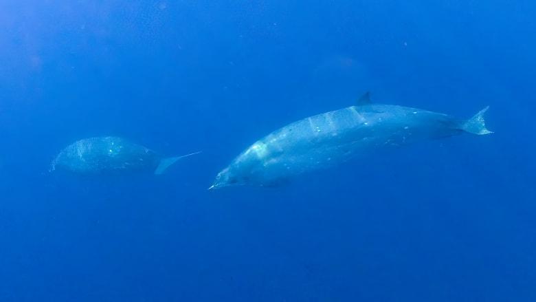 اكتشاف فصيلة جديدة من الحيتان بالقرب من ساحل المكسيك