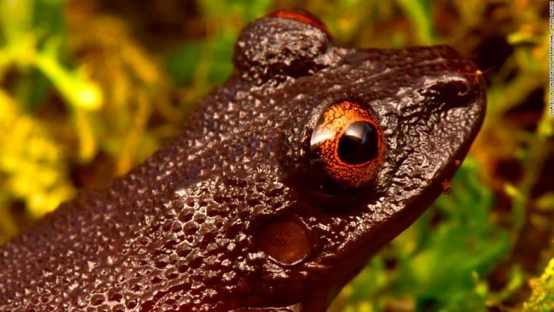 العثور على 20 نوع جديد.. إعادة اكتشاف الحياة البرية المفقودة في جبال الأنديز البوليفية