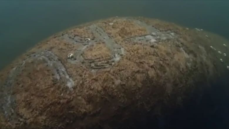 تحقيق بواقعة حفر اسم ترامب على ظهر خروف بحر مهدد بالانقراض