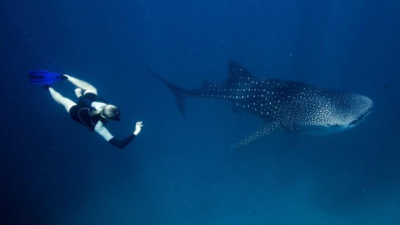 """تكنولوجيا من """"ناسا"""" تساعد في حماية أكبر أسماك القرش في العالم"""
