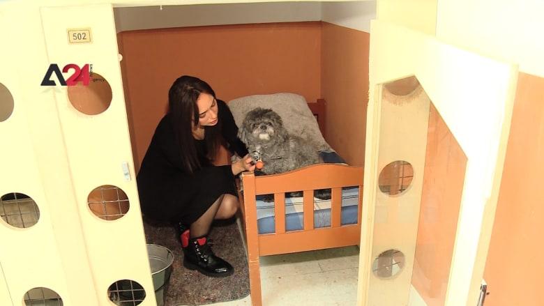 فتاة تونسية تفتتح أول فندق 5 نجوم للكلاب والقطط