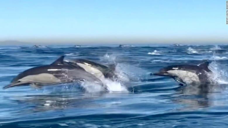 210224130056-newport-beach-dolphin-stampede-2-super-169.jpg