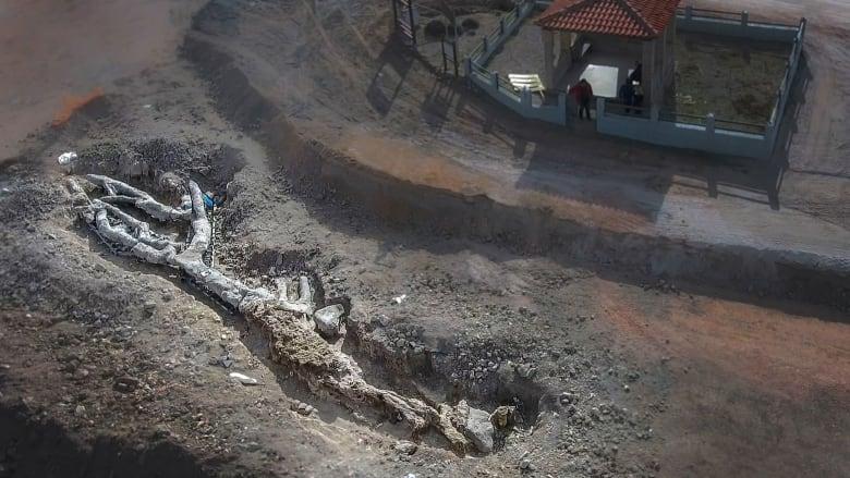 اكتشاف نادر.. العثور على شجرة متحجرة مكتملة عمرها 20 مليون عام في ليسبوس