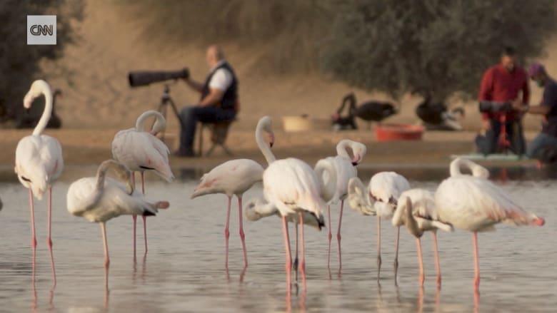 بحيرات القدرة في دبي..هنا يتجمع المصورون لالتقاط جمال الحياة البرية في دبي