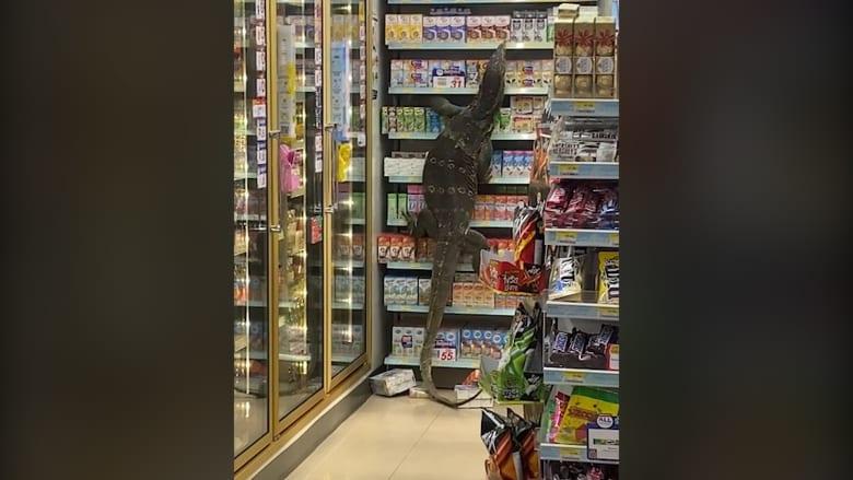أرعبت المتسوقين.. سحلية عملاقة تتسلق أرفف سوبر ماركت بحثا عن طعام