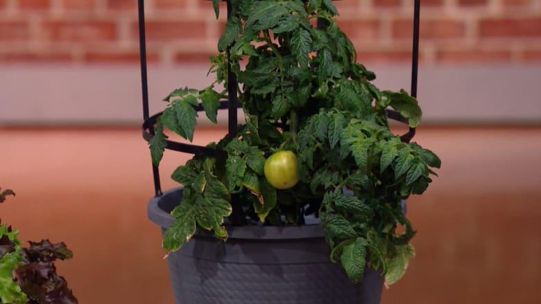 نصائح لزراعة الخضار والفاكهة في منزلك سواء كان كبيراً أم صغيراً
