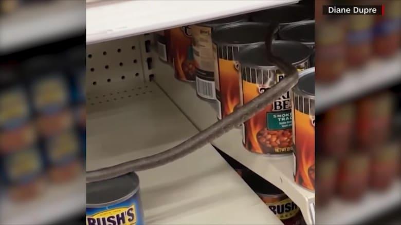 """شاهد.. متسوقة تجد ثعباناً أثناء تسوقها في متجر """"تارغت"""""""